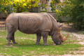 White rhino in the zoo - PhotoDune Item for Sale