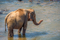 Elephant bathing in river - PhotoDune Item for Sale