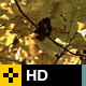 Fall Leaves Series - 007 - VideoHive Item for Sale