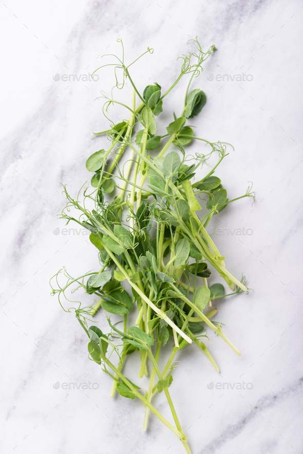 Fresh micro greens peas sprouts - Stock Photo - Images