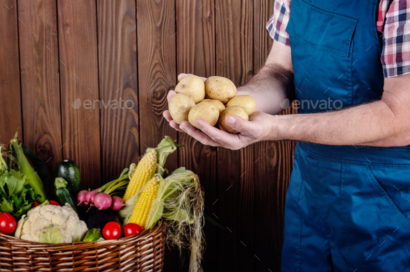 Farmer hold fresh organic potatoes in his hands. Vegetable harve - Stock Photo - Images