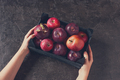 Female Hands Holding the Box with Red Apples - PhotoDune Item for Sale
