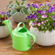 beautiful pansy summer flowers in flowerpots in garden - PhotoDune Item for Sale