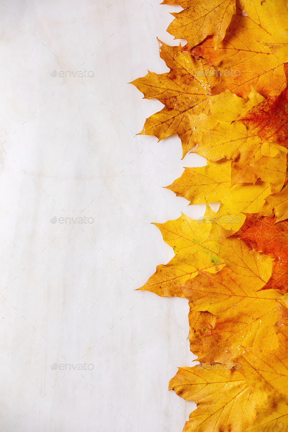 Yellow autumn maple leaves - Stock Photo - Images