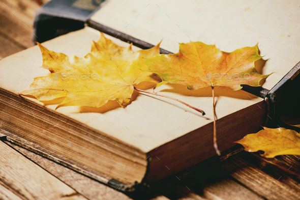 Books and autumn leaves - Stock Photo - Images