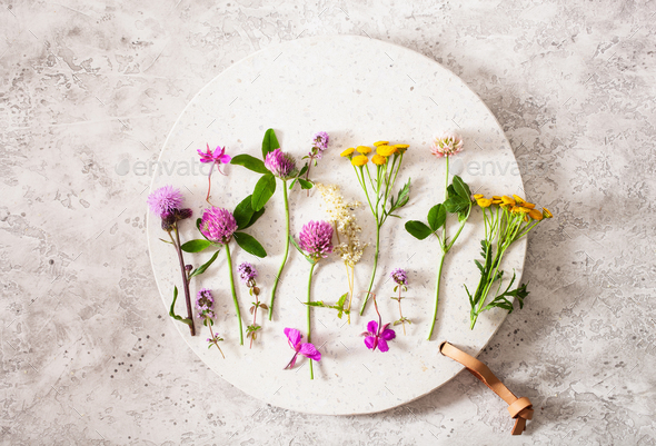 medical flowers herbs, alternative medicine. clover milfoil tans - Stock Photo - Images