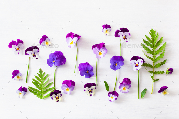 beautiful pansy summer flowers flatlay on white - Stock Photo - Images