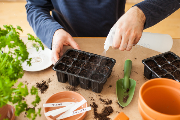 gardening, planting at home. man sowing seeds in germination box - Stock Photo - Images