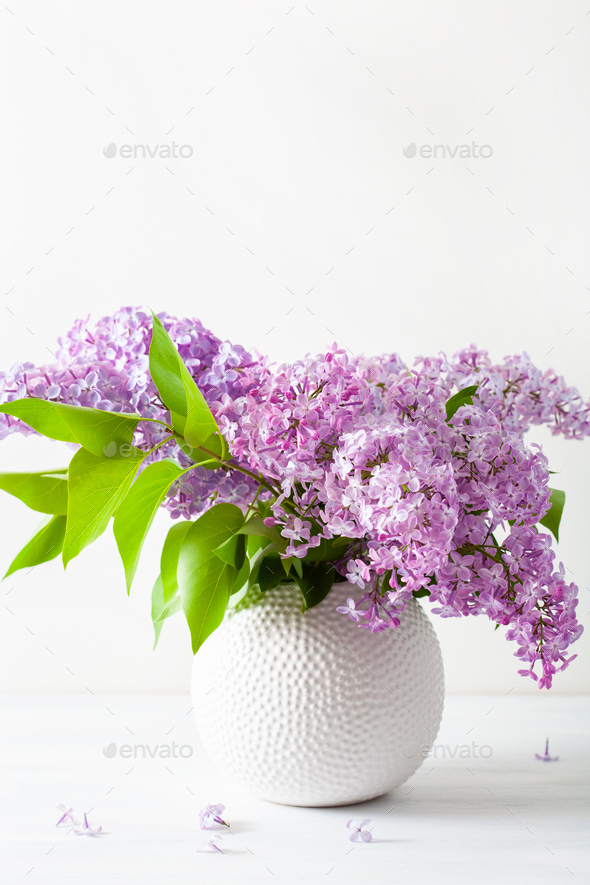 beautiful lilac flowers in vase on white background - Stock Photo - Images