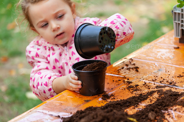 View of toddler child planting young beet seedling in to a ferti - Stock Photo - Images