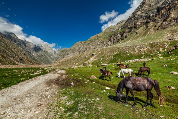 Horses grazing in Himalayas - Stock Photo - Images