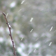 Snow and bud - VideoHive Item for Sale