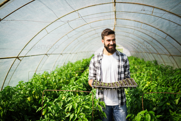 Young man doing plant work in hothouse - Stock Photo - Images