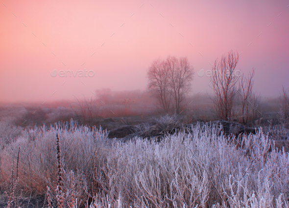Misty dawn at the forest lake - Stock Photo - Images