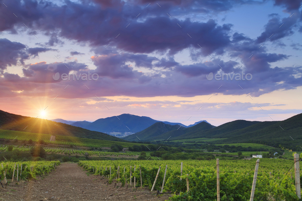 Beautiful sunset sky over a vineyard in the mountains - Stock Photo - Images