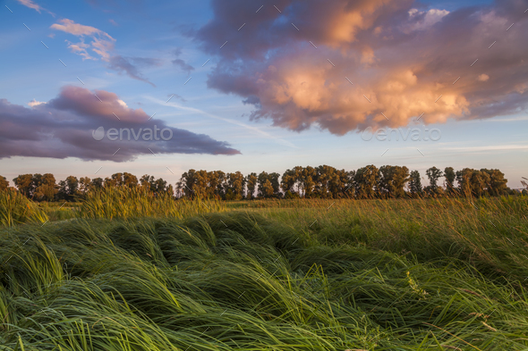 Landscape with marsh overgrown sedge - Stock Photo - Images
