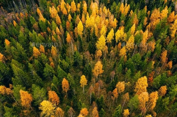 Aerial view of colored forest in autumn. Beautiful autumn forest with red, orange and yellow trees. - Stock Photo - Images