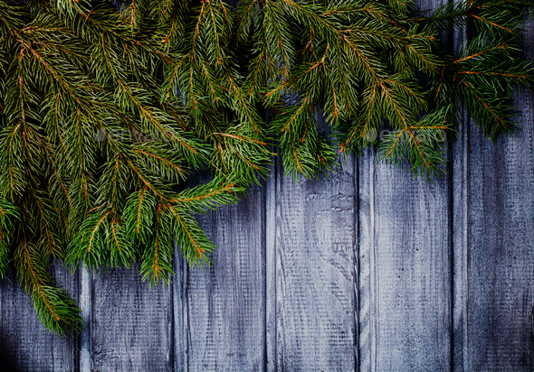 Green Spruce Branches - Stock Photo - Images