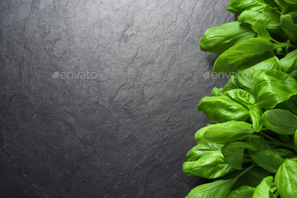 Bunch of fresh green basil leaves on black background - Stock Photo - Images