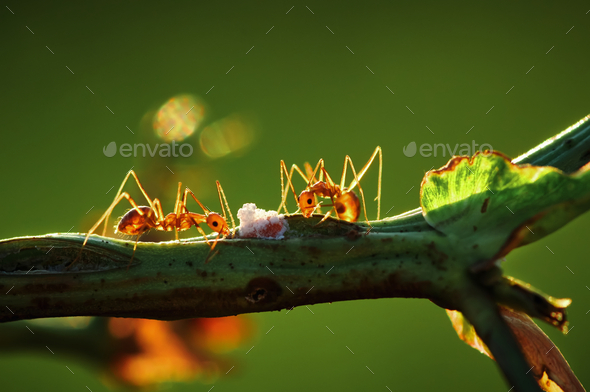 Close-up view of ant climbing on the stem - Stock Photo - Images