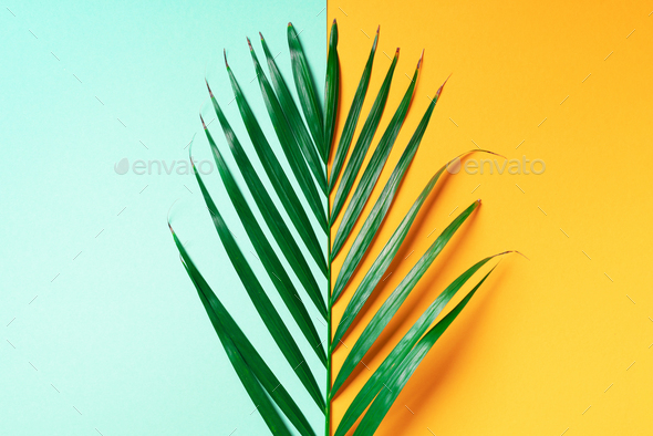Palm leaf on trendy yellow and green background. Top view. Copy space. Fashion minimalism. Summer - Stock Photo - Images