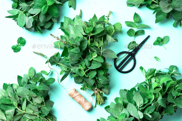 Fresh peppermint leaves on trendy green background. Top view. Copy space. Bunch of mint herbs - Stock Photo - Images