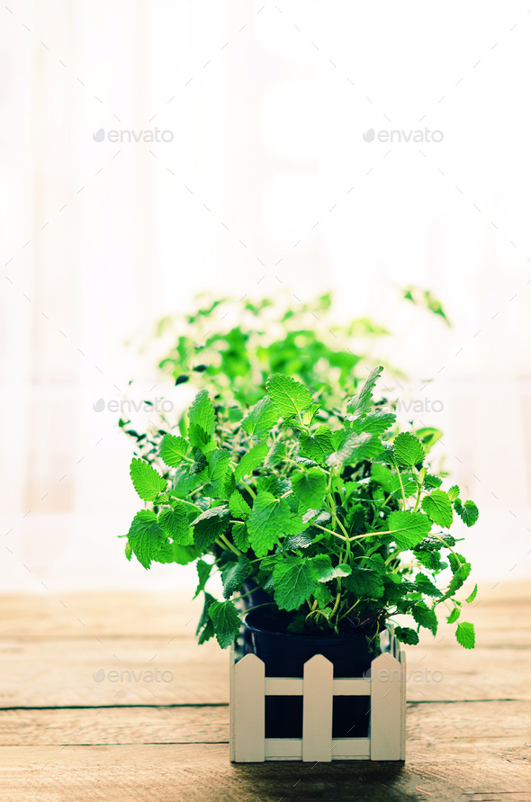 Abstract spring or summer concept. Organic herbs melissa, mint, thyme, basil, parsley on wooden - Stock Photo - Images