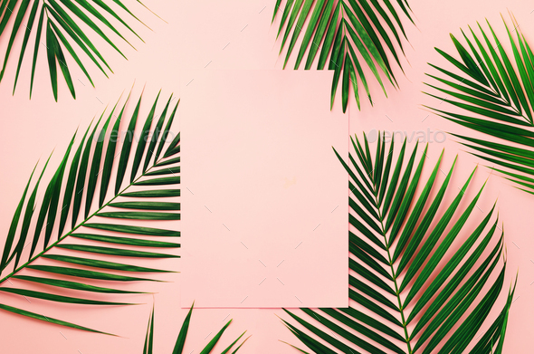 Tropical Palm Leaves On Pastel Pink Background With Paper Card Note Minimal Summer Concept Stock Photo By Jchizhe Because sometimes it's not easy being green. https photodune net item tropical palm leaves on pastel pink background with paper card note minimal summer concept 24851690