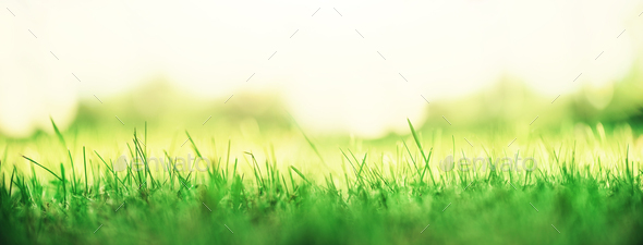 Fresh green spring grass with sun leaks effect, copy space. Soft Focus. Abstract nature background
