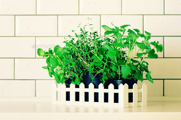 Mint, thyme, basil, parsley - aromatic organic herbs on white kitchen table, brick tile background - Stock Photo - Images