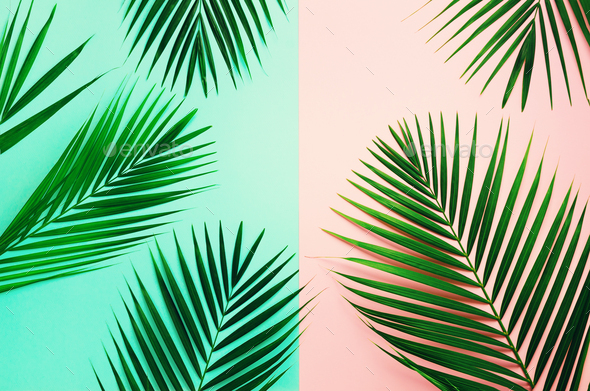 Styled summer concept. Tropical palm leaves on pink and blue background. Minimal nature. Creative