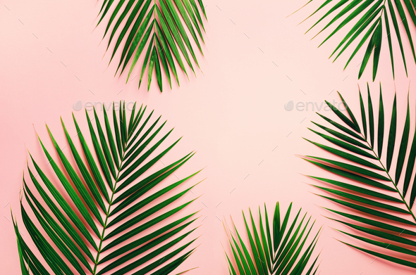 Tropical Palm Leaves On Pastel Pink Background Minimal Summer Concept Creative Flat Lay With Copy Stock Photo By Jchizhe The most common pink tropical leaves material is cotton. https photodune net item tropical palm leaves on pastel pink background minimal summer concept creative flat lay with copy 24852201