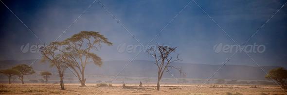 Landscape of Serengeti National Park, Serengeti, Tanzania - Stock Photo - Images