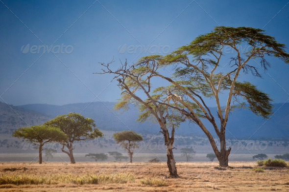 Landscape of Serengeti National Park, Serengeti, Tanzania - Stock Photo - Images