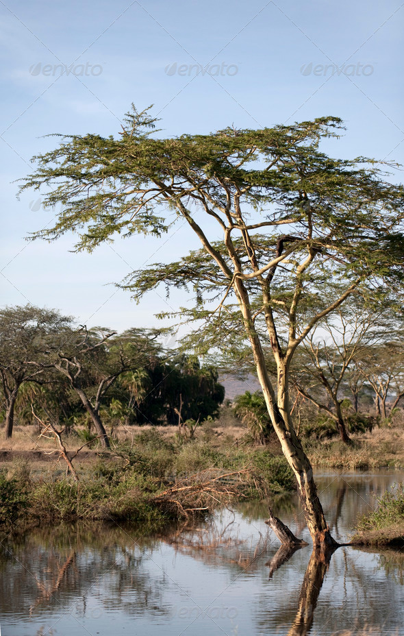 Seronera river in the Serengeti, Tanzania, Africa - Stock Photo - Images