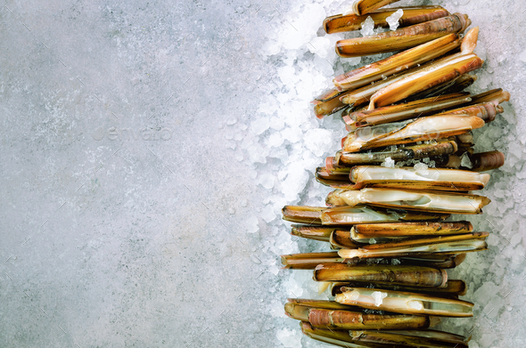 Bundle, bunch of fresh razor clams on ice, grey concrete background. Copy space, top view, banner - Stock Photo - Images