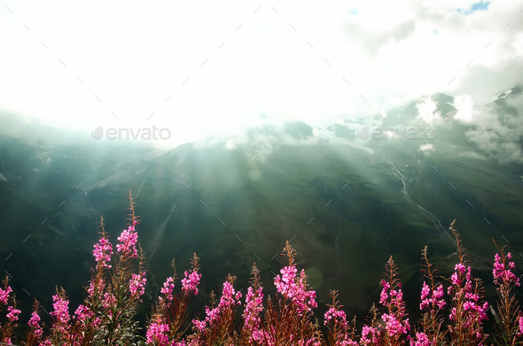 First spring flowers on Alps mountains background in cloudy day. Copy space. Spring, summer, travel - Stock Photo - Images