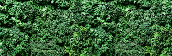 Fresh organic green kale background, selective focus, top view, copy space. Green texture. Banner - Stock Photo - Images