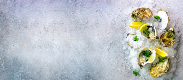 Fresh opened oysters, lemon, herbs, ice on concrete stone grey background. Top view, copy space - Stock Photo - Images