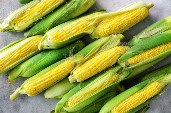 Fresh corn on cobs on light grey concrete background, closeup, top view, copy space - Stock Photo - Images