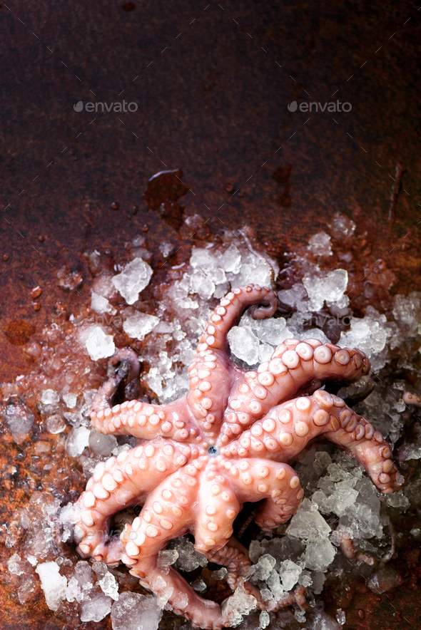 Fresh raw octopus on ice, brown dark background. Top view, copy space - Stock Photo - Images