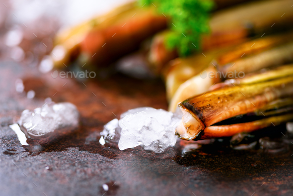 Fresh razor clams on ice, grey concrete background. Copy space, top view - Stock Photo - Images