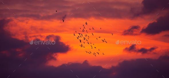 Bird migration - Stock Photo - Images
