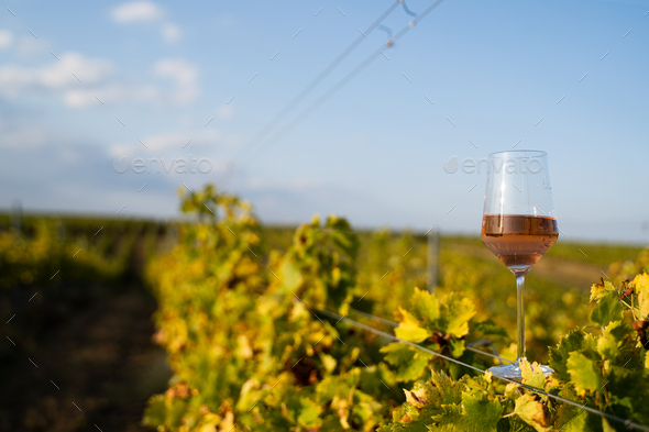 glass of rose wine in the vineyard with blue sky - Stock Photo - Images