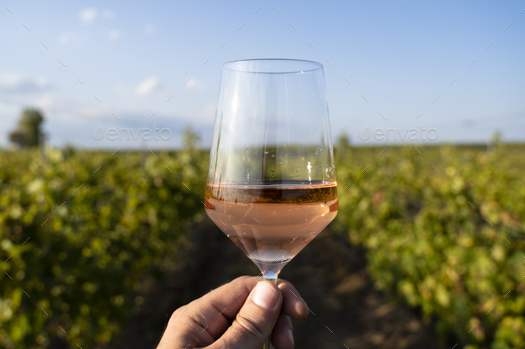 hand holding a glass of rose wine in front of vineyard - Stock Photo - Images