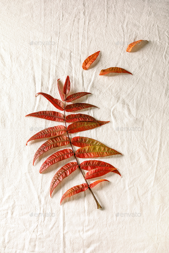Red autumn leaves - Stock Photo - Images