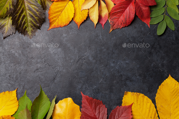 Autumn background with colorful leaves - Stock Photo - Images