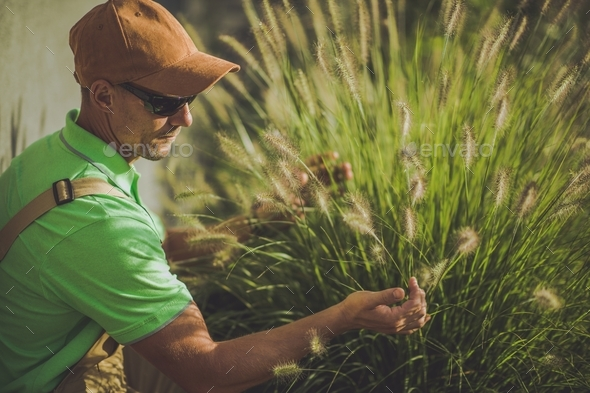 Decorative Garden Grasses - Stock Photo - Images