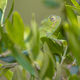 African chameleon in natural tree habitat - PhotoDune Item for Sale