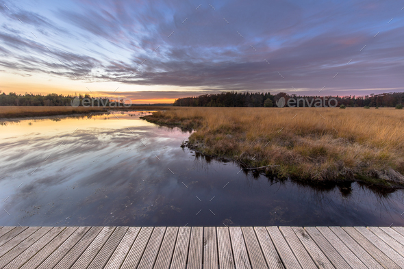 Boardwalk in natural heathland fen - Stock Photo - Images